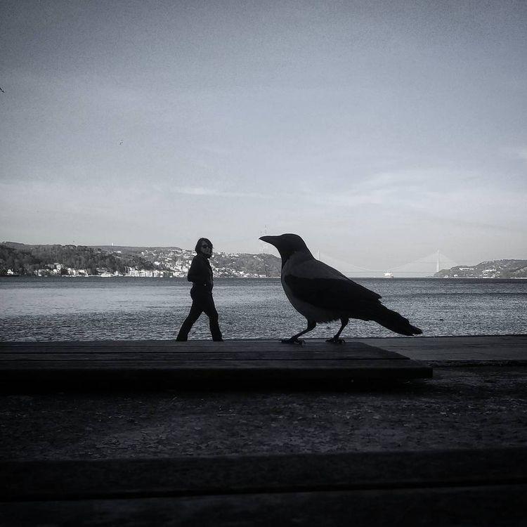 scifi, giant, crows - gepetdo | ello