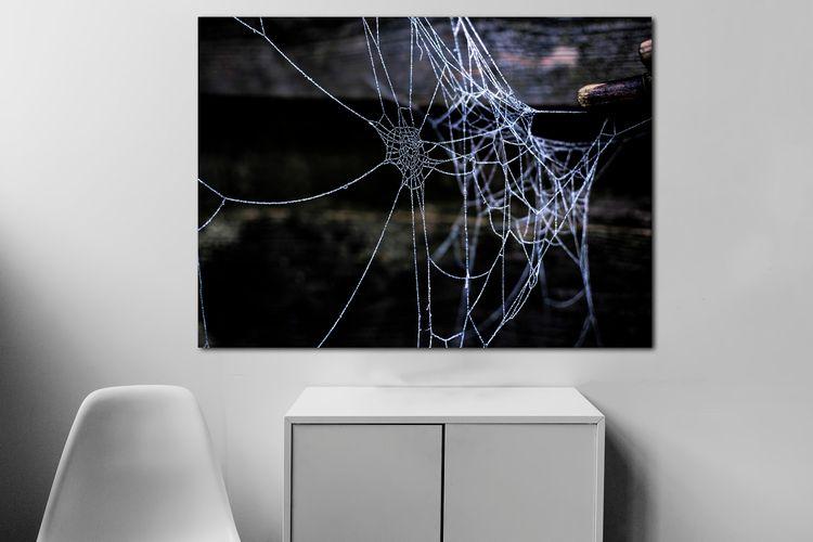 hung fragile web diamonds sun.  - arc1 | ello