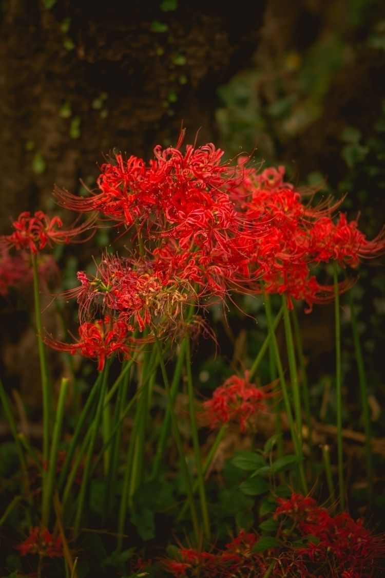 red...  - 自然, nature, outdoors, hiking - fokality | ello