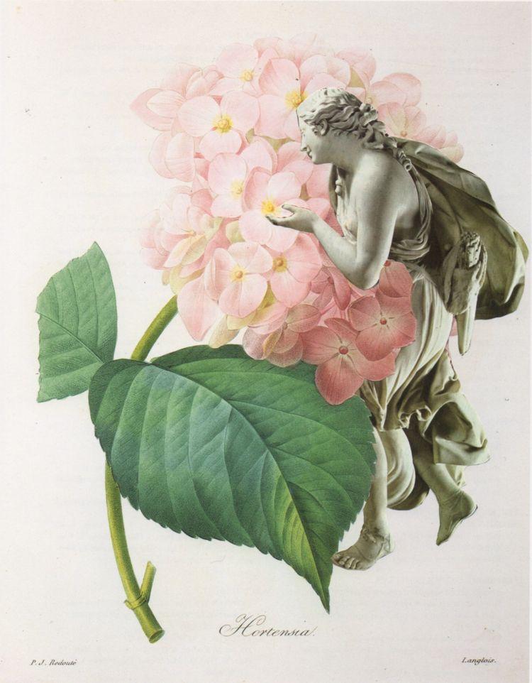 Hortensia - handmade collage 11 - deborahstevensonartist | ello