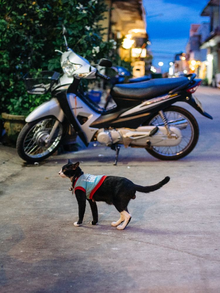 dressed cat Savannahket. Laos.  - jorishermans | ello