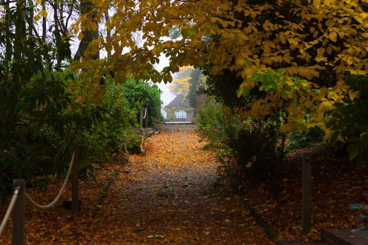 Leafy Path - llamnuds, autumnal - shaundunmall | ello