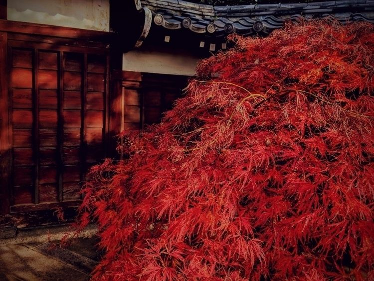 tree temple gate...  - denenchofu - fokality | ello
