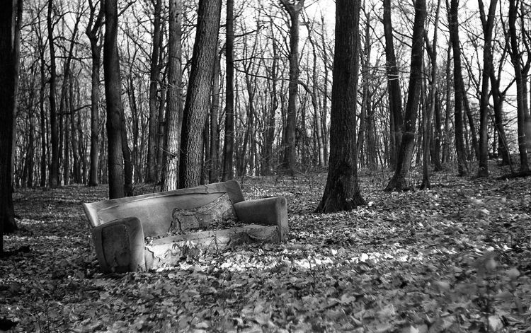 forest casting couch - analogue - g_plus_theworld | ello