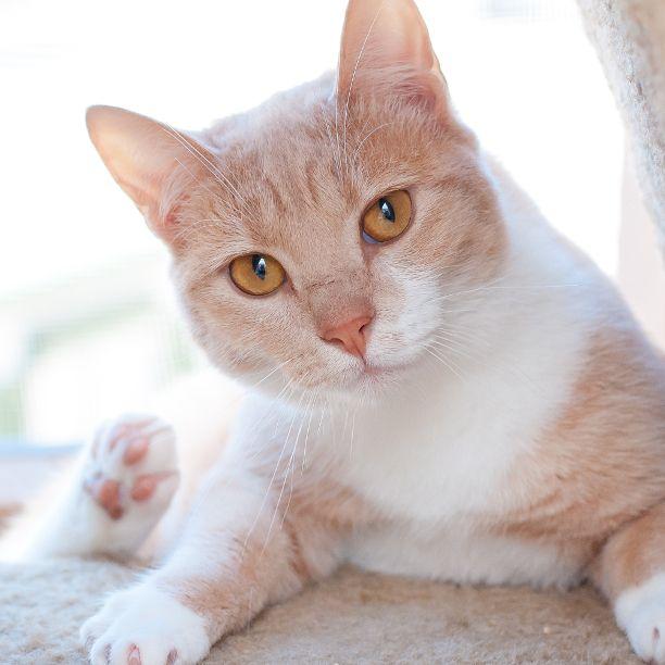 COMMENT SHARE Meet: Sasha, Spay - snapcats | ello