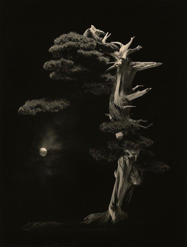 Masao Yamamoto Bonsai 4001 - wabisabi - wabi__sabi | ello