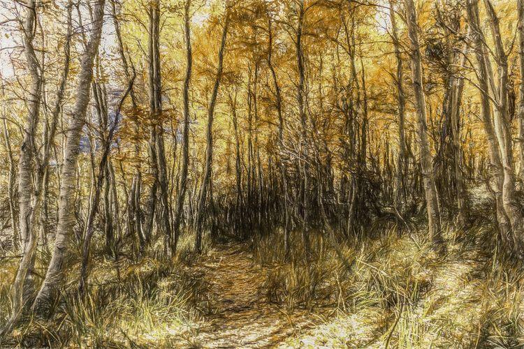 Follow Path Silver Lake, Mono C - davidseibold | ello