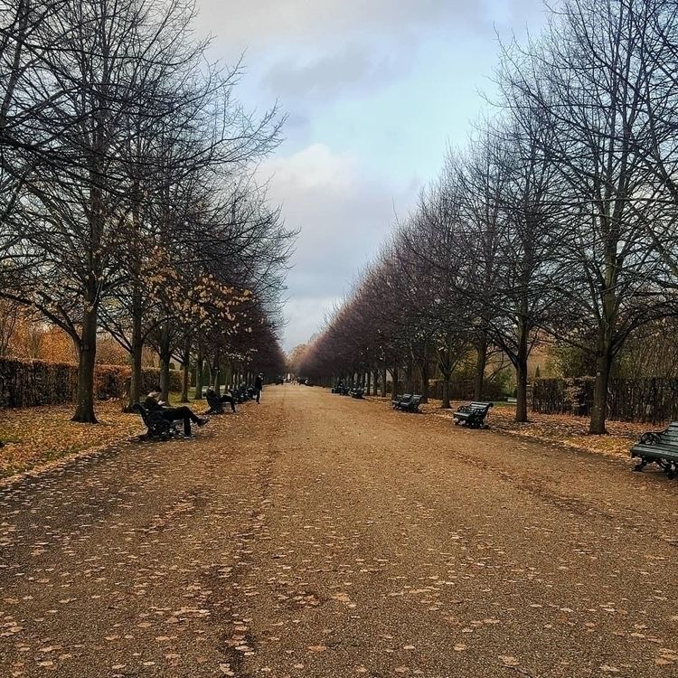 Autumn Park. November 2018 - regentspark - lowenhazel | ello
