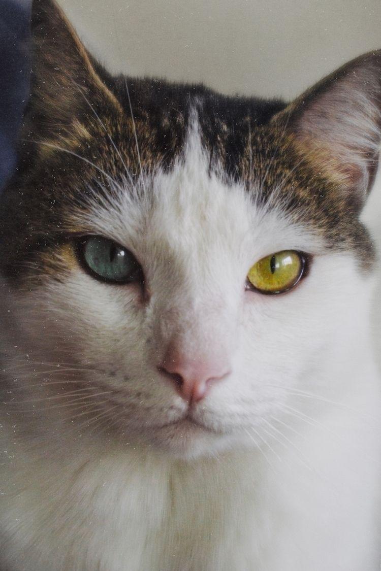 kitty, cat, portrait - montcarver | ello