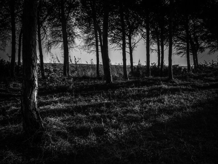 Lights shadows woods - blackandwhitephotography - gavinobazzoni | ello