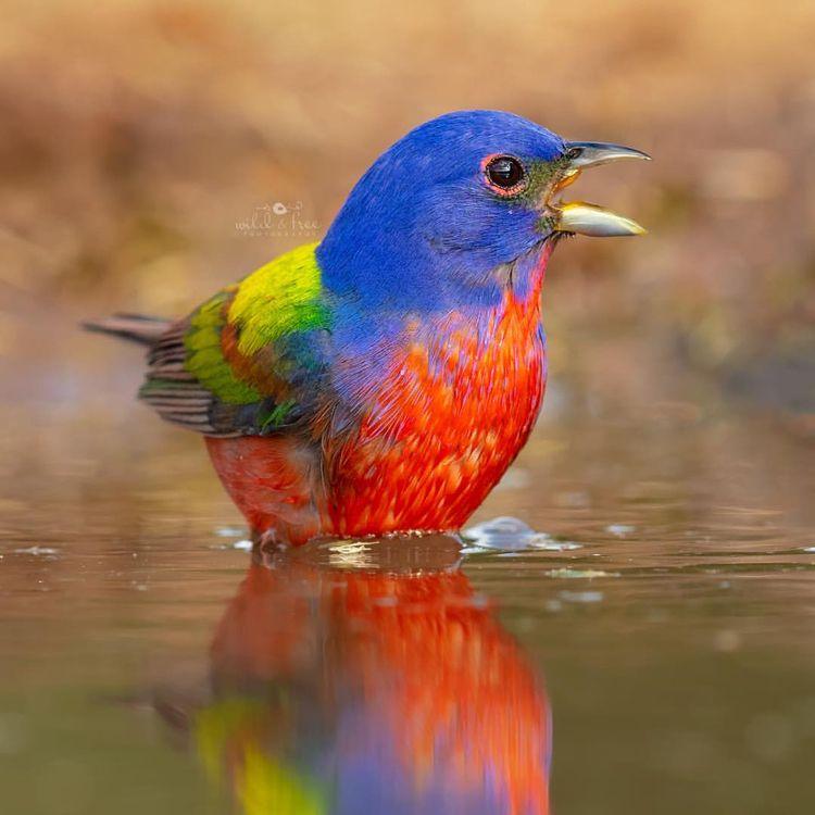Wonderful Birds Photography Lee - photogrist | ello