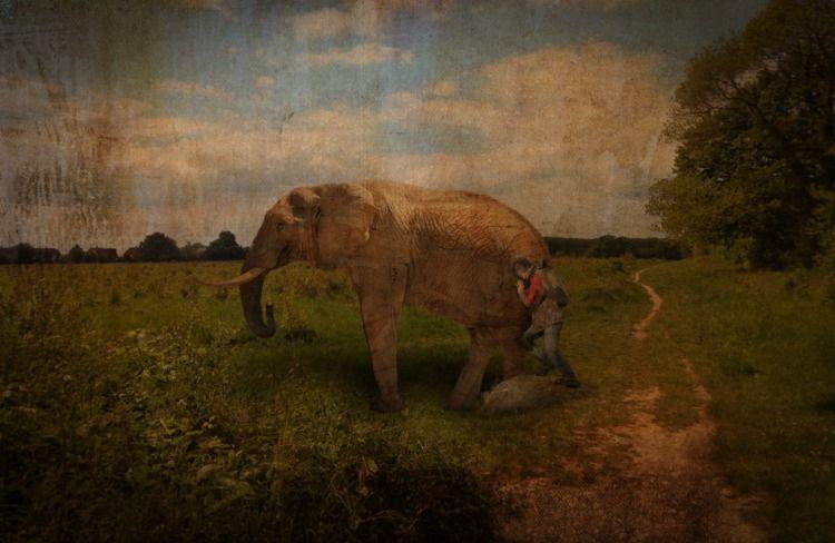 Pushing elephant - llamnuds, field - shaundunmall | ello