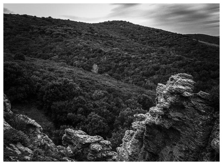 Nurra, woods rocks - blackandwhite - gavinobazzoni | ello