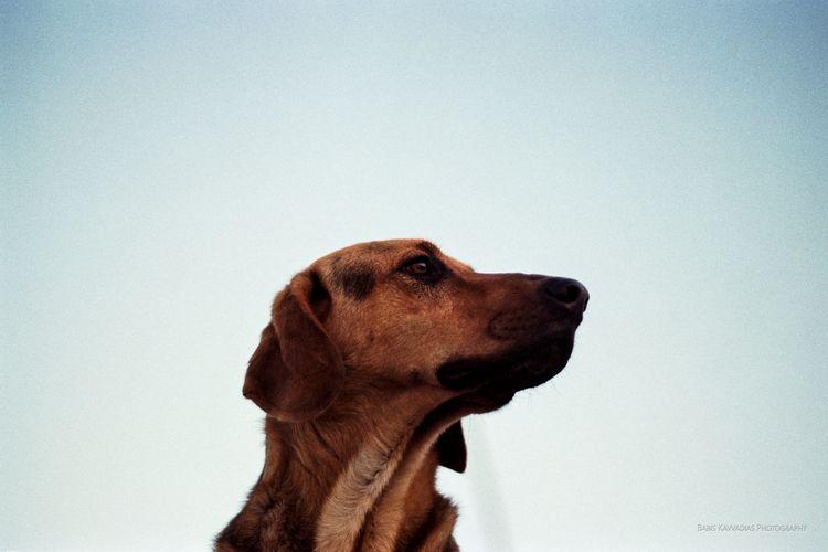 Analog stray dog, Egio port Cam - bampgs   ello
