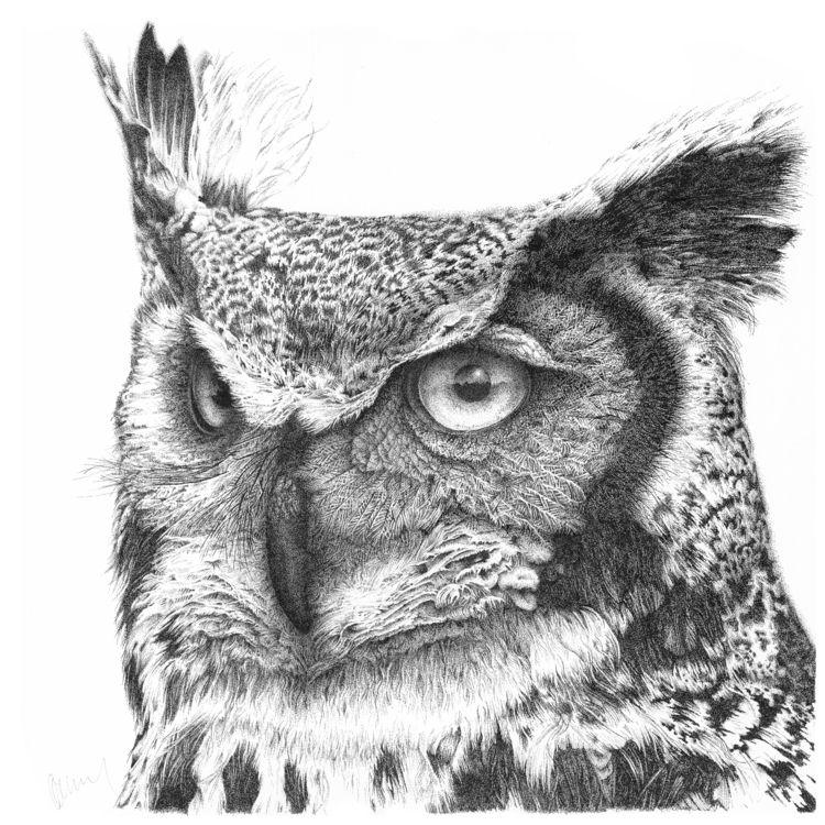 Owl No2 TITLE: Longeared MEDIUM - garywilcockson | ello