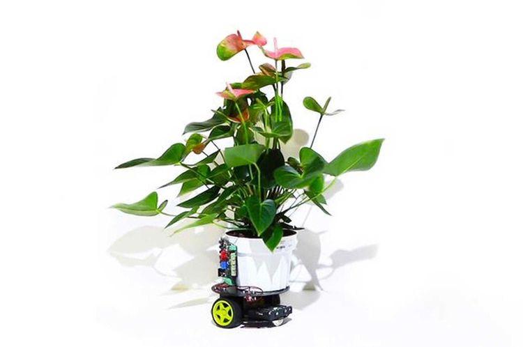 Plant-robot hybrid MIT sunny sp - bonniegrrl | ello