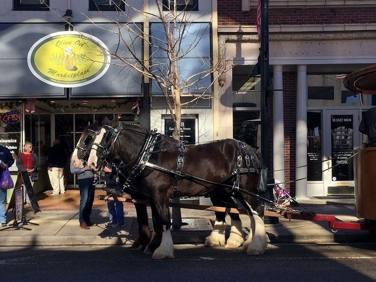 1488. trolley horses loading Ch - moosedixon | ello