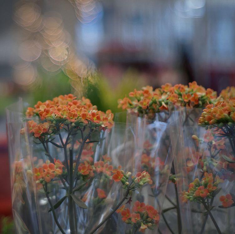Flowerism - photography, plasticphantastic - marcushammerschmitt | ello