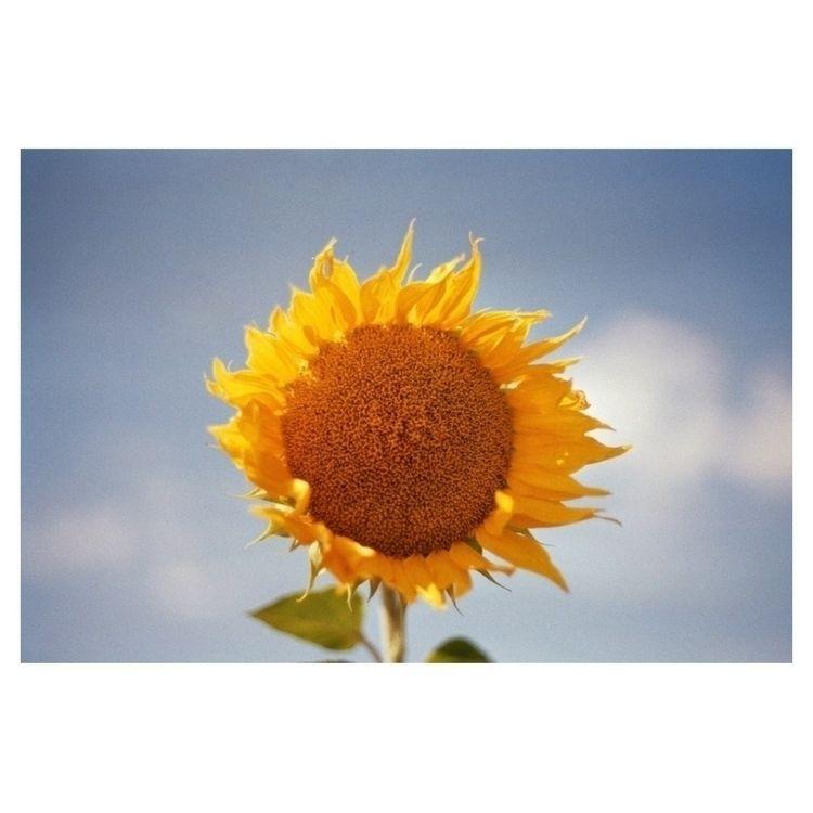 "print sale ""wild sunflower"" sho - madebyfelix | ello"