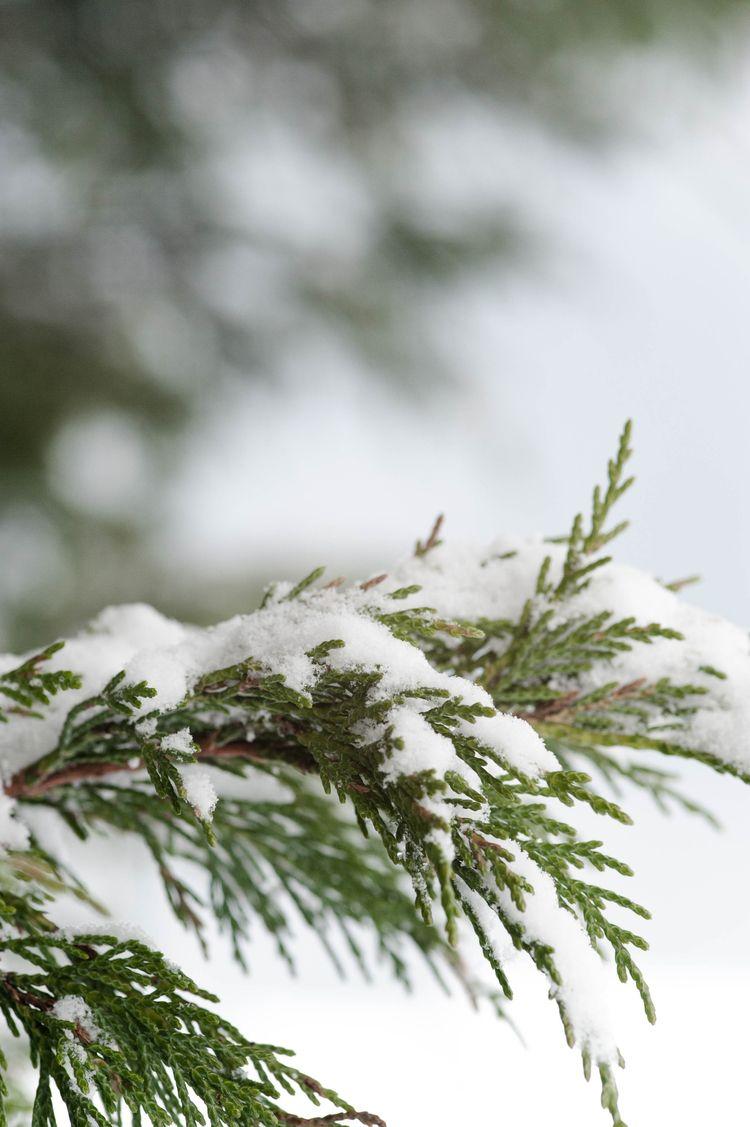 Spring snow 2018 - adventure, nature - hannahjaneclements | ello
