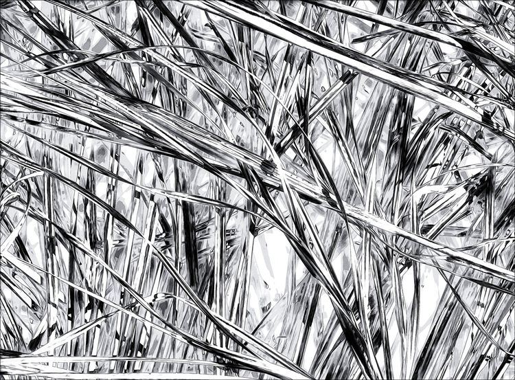 marsh grass abstract  - monochrome - docdenny | ello