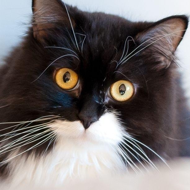 COMMENT SHARE BLACK WHITE) CAT  - snapcats   ello