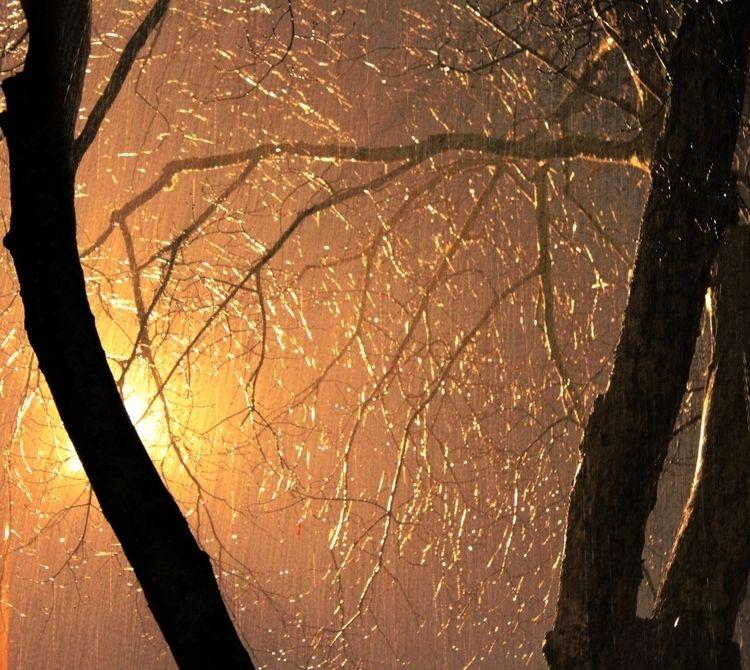 Rain Trees Streetlights - trees - ranjiroo | ello