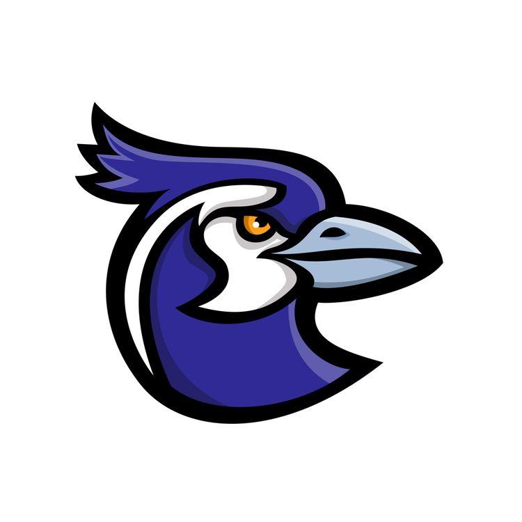 Black-throated Magpie-Jay Masco - patrimonio | ello