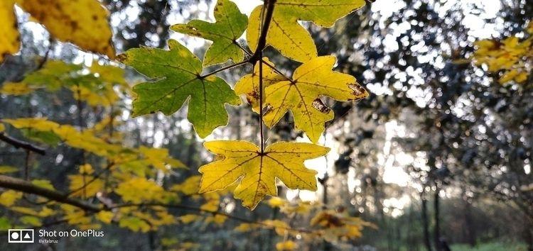 fall, leaves, rome - clo_taire   ello
