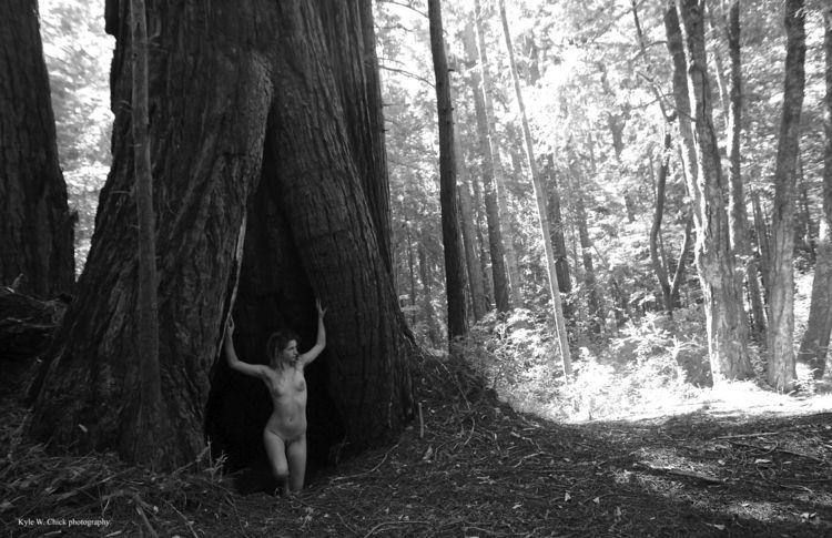 Tree House Butano State Park, C - gloriagray | ello