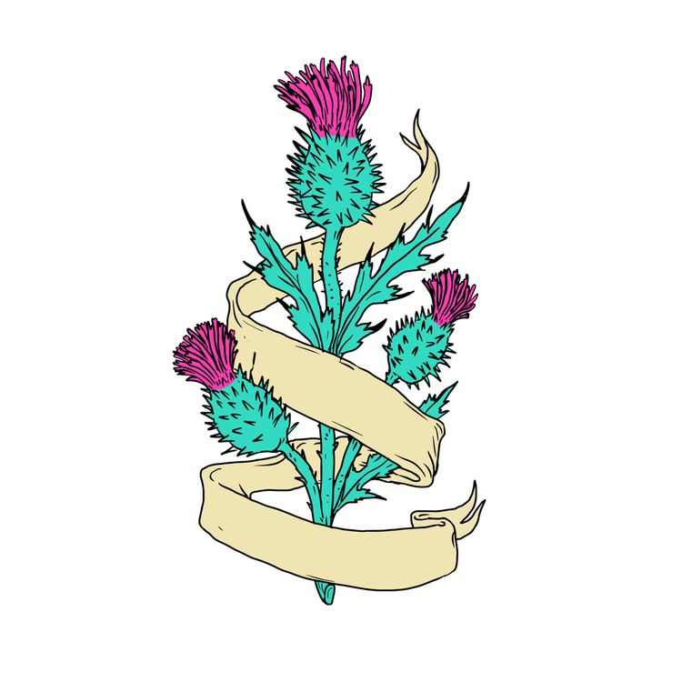 Scottish Thistle Ribbon Color D - patrimonio | ello