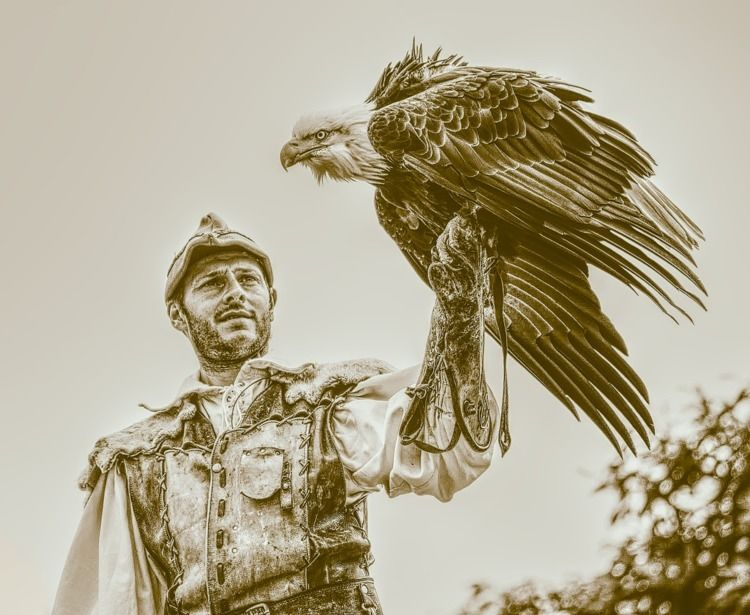 eagle handler incredible bird s - shaundunmall | ello