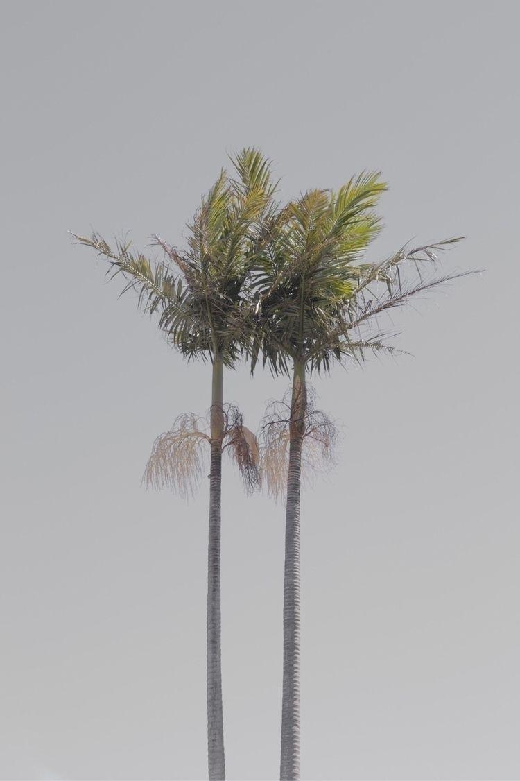 palmtree, summer, tree, palm - jokalinowski_ | ello