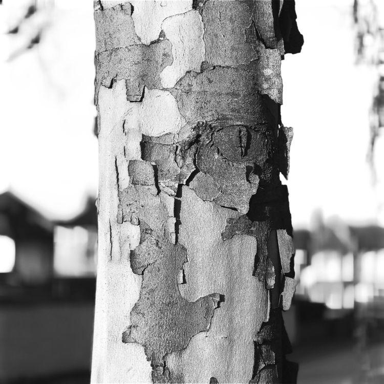 tree - cyberdonkey | ello