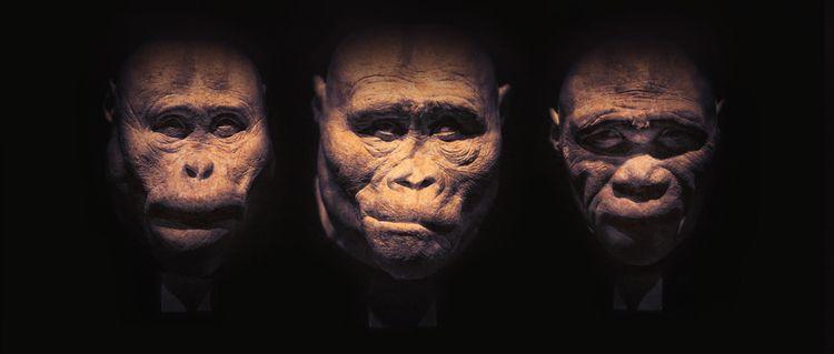 Heads - head, heads, human, ape - ingomenhard | ello