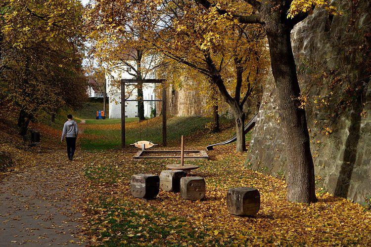 fall yellow - photography, snapshot - marcushammerschmitt | ello