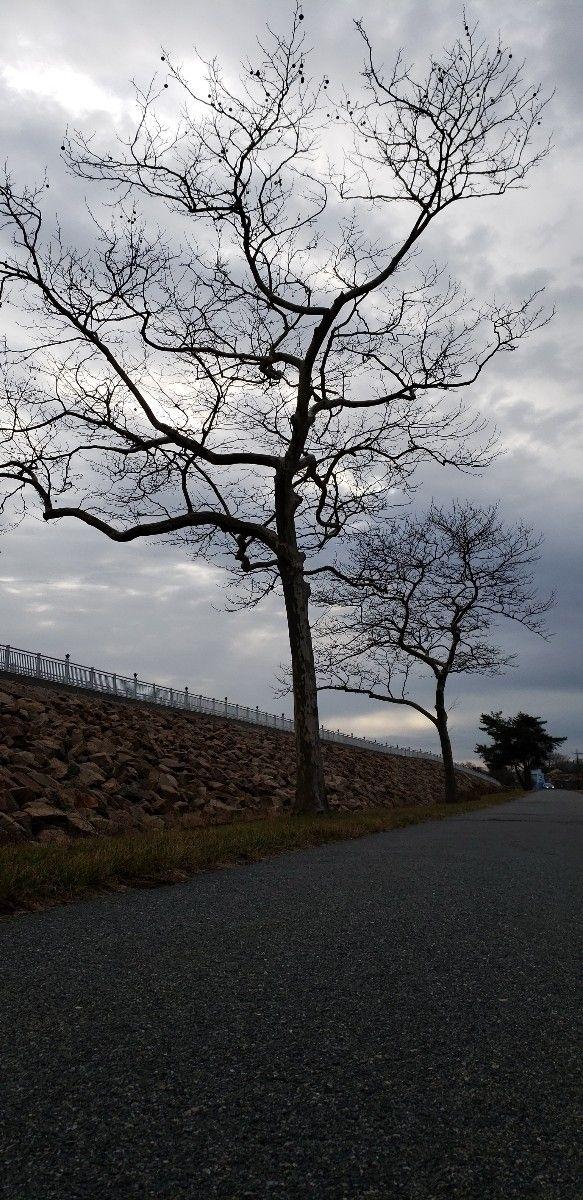 left - nuts, trees, outdoor, critters - ib50ish | ello