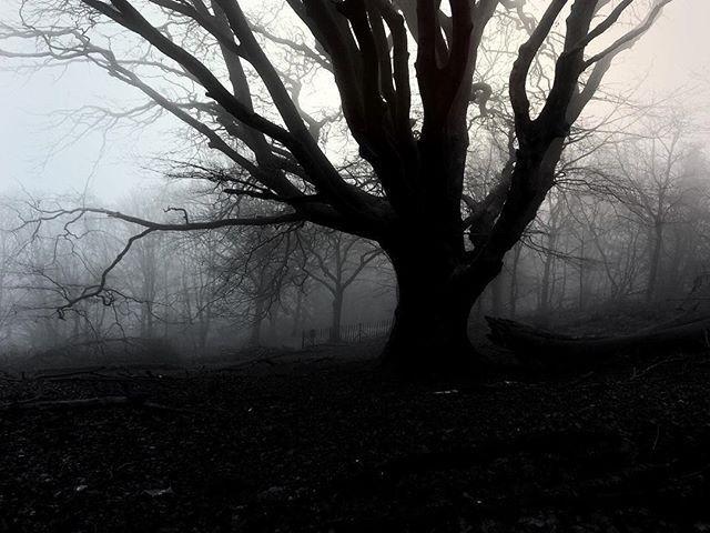 Ancient Forest - Iphone, iphoneography - itsrichardjohnson   ello