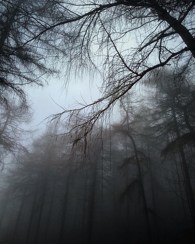 Trees, Grow Big - Iphone, iphoneography - itsrichardjohnson | ello