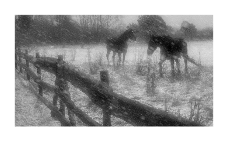 2019. Photo SVIATOSLAV. Snow. H - sviatoslavs | ello