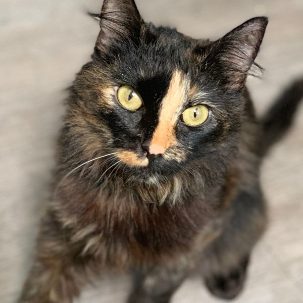 COMMENT SHARE Meet: Trinity, Sp - snapcats | ello
