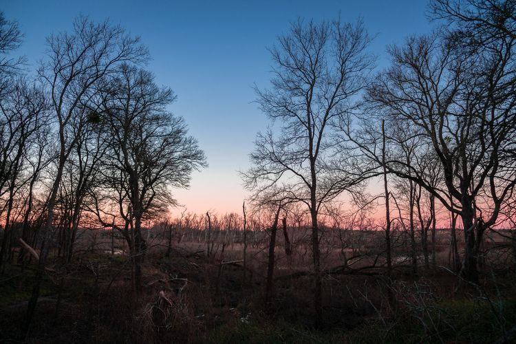 Woodland Morning pre-dawn sun s - 75centralphotography | ello