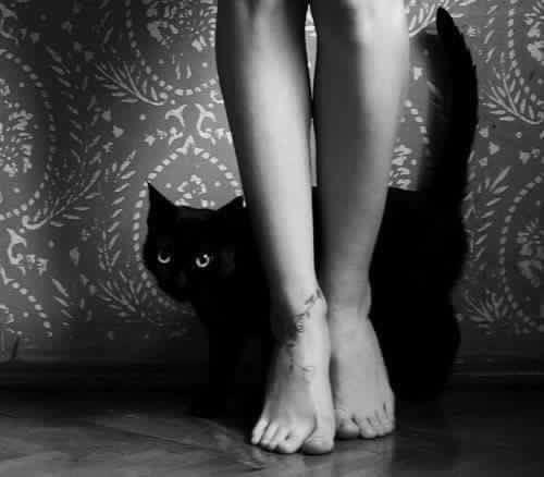 Yearning love feel cat twining  - lolosbri | ello