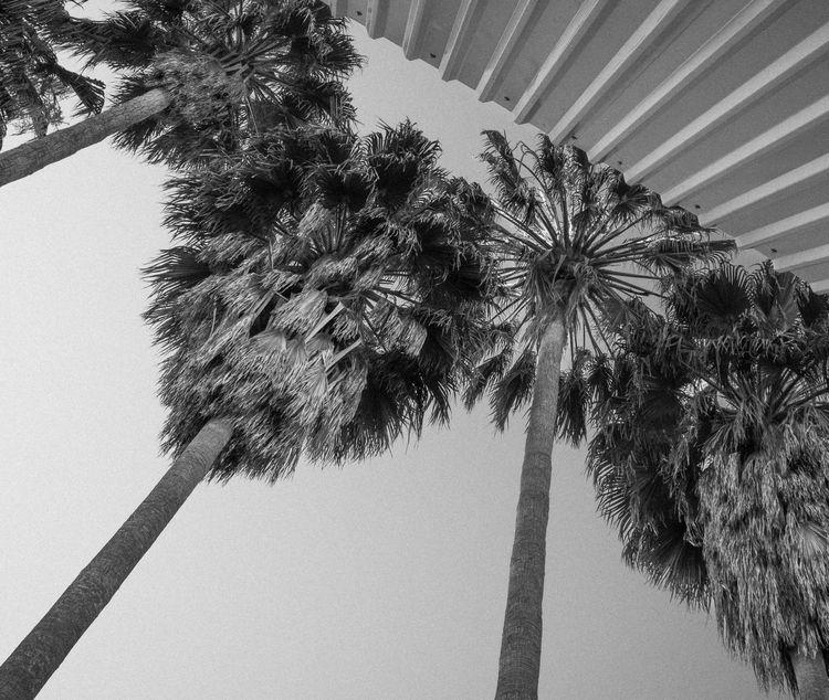 ->Summer perspective ->Me - macchiavello | ello