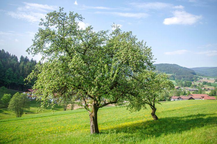 spring 2018 - bayrischerwald, green - chiaralucissimi | ello