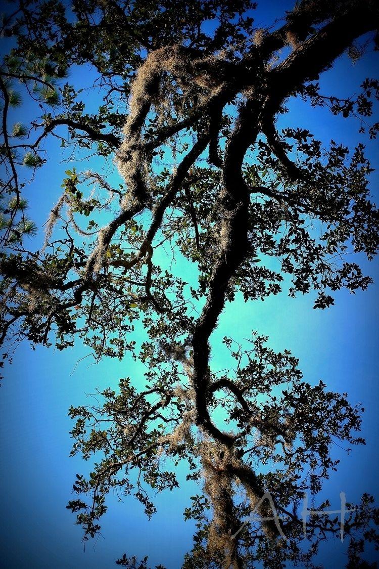 Sky Branches Savannah, GA - savannah - anistie   ello