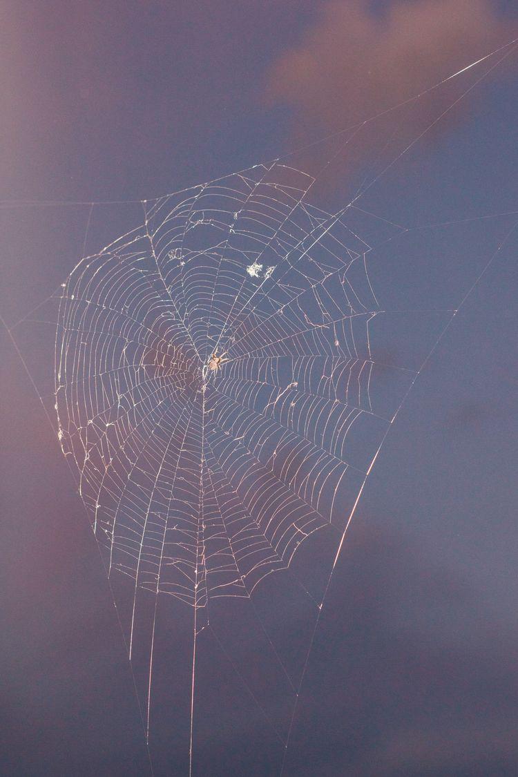 Cobweb Monty Kaplan - thinkoutsidethebox | ello