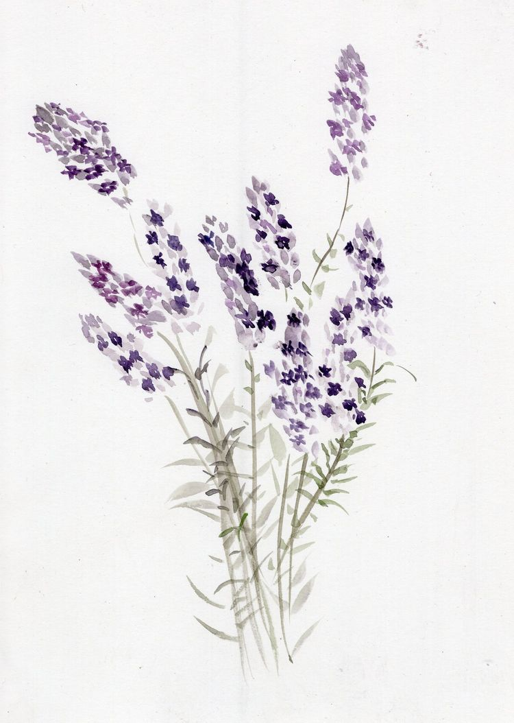 Lavender Shadows Watercolor Bri - havekat | ello