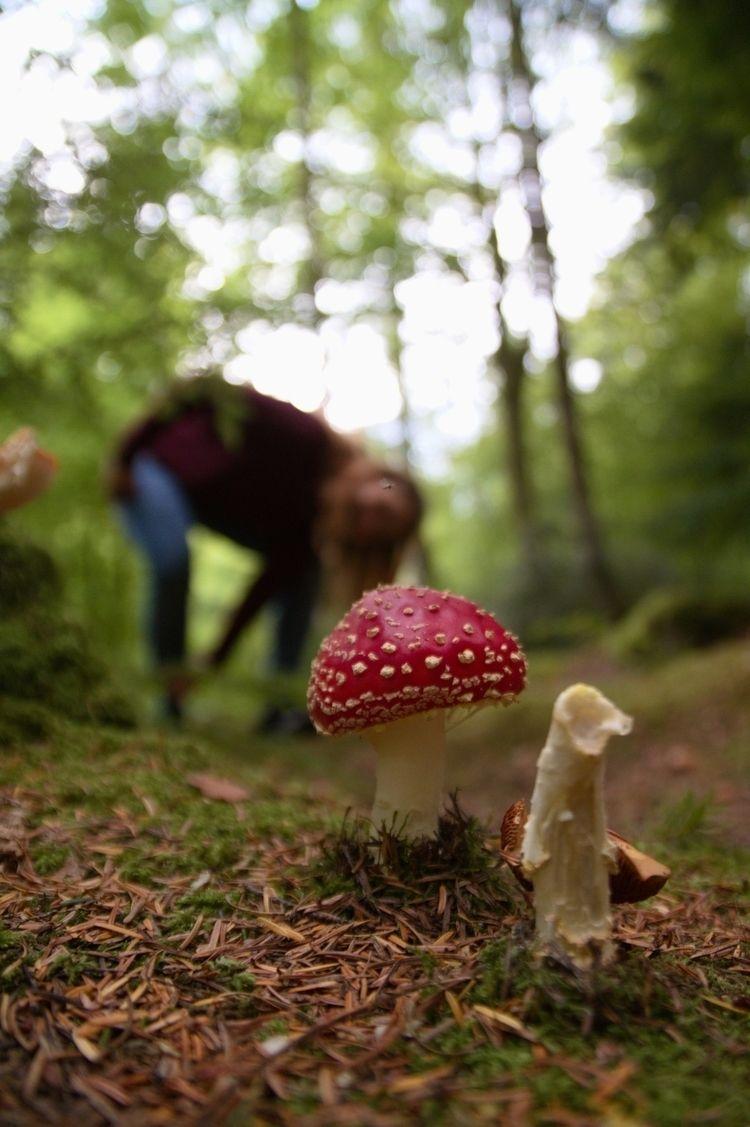 forestfloor, shrooms, mushroomphotography - t0ffer | ello