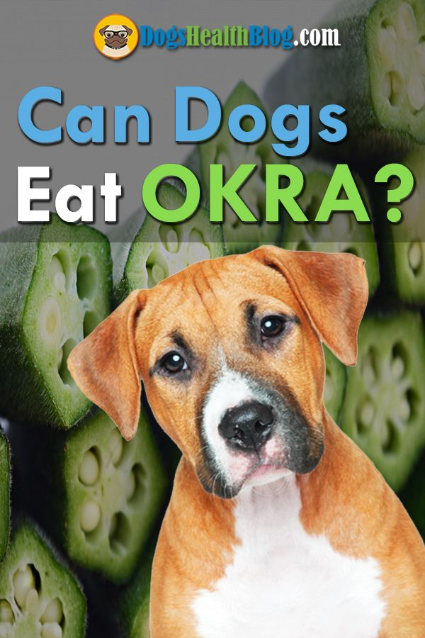 Source: Dogs Eat Okra - dog, dogs - dogshealth | ello